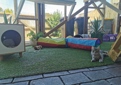 CATTERY AUCKLAND 4